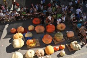 IV Feria de calabazas gigantes Valtierra 2012